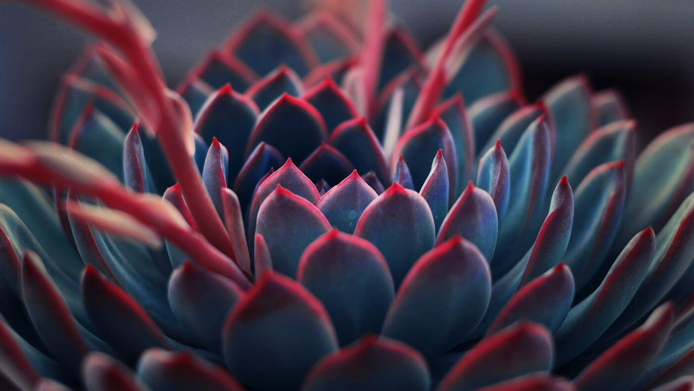 Colorful succulent